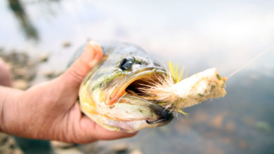 Photo of Fun With Bass On Fly