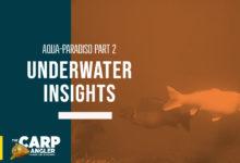 Underwater Insights 2