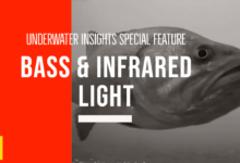 Photo of Bass & Infrared