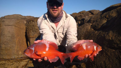 Photo of X. Guess the combined mass of these Red Romans and WIN an Adrenalin Fishing Tackle Hamper